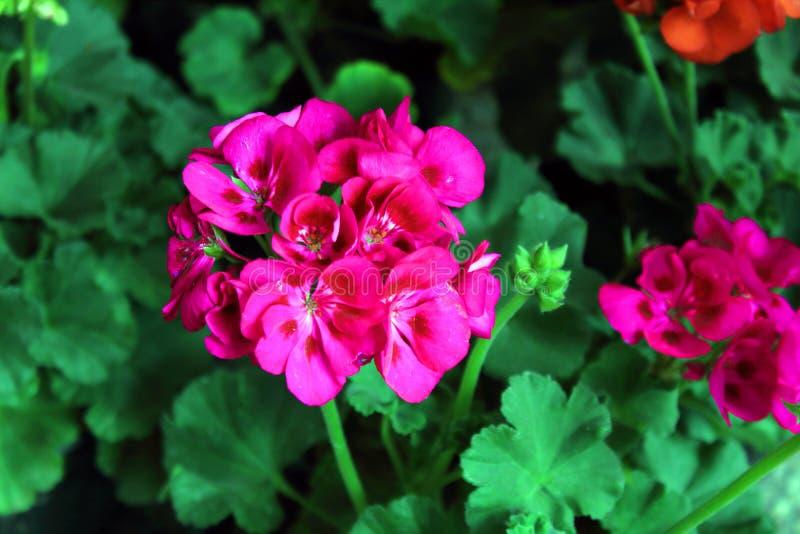 L'arrangement floral de différentes couleurs décorent le jardin, la maison ou le bureau photos stock