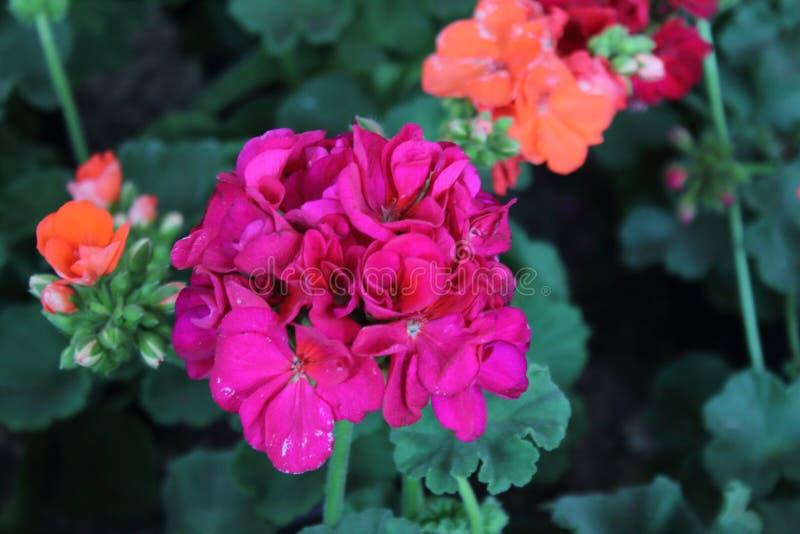 L'arrangement floral de différentes couleurs décorent le jardin, la maison ou le bureau photo libre de droits