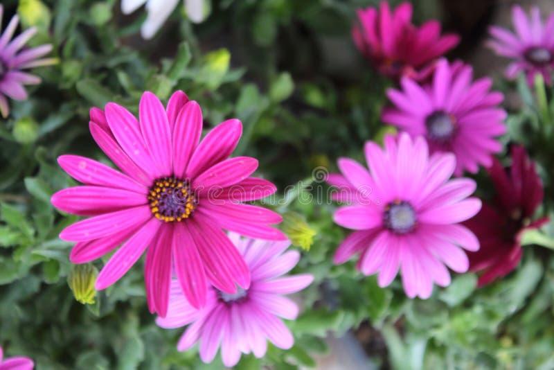 L'arrangement floral de différentes couleurs décorent le jardin, la maison ou le bureau photos libres de droits
