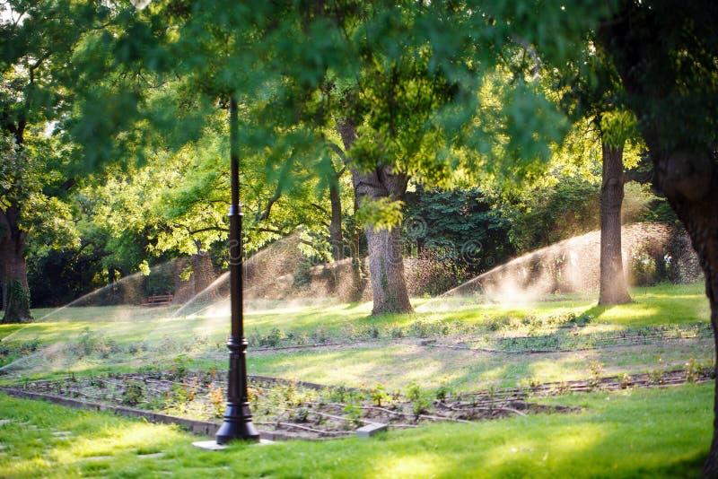 L'arrosage automatique des pelouses en parc, plusieurs fontaines sont placés le long des allées Pelouses de arrosage un jour enso photos libres de droits