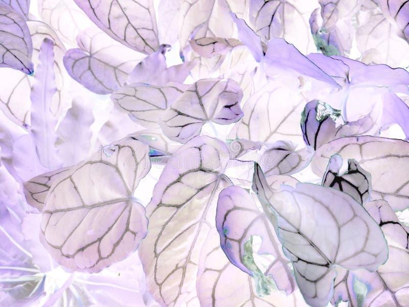 L'art des feuilles négatives de crystallinum d'anthure photo libre de droits