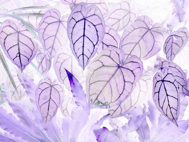 L'art des feuilles négatives de crystallinum d'anthure photographie stock libre de droits