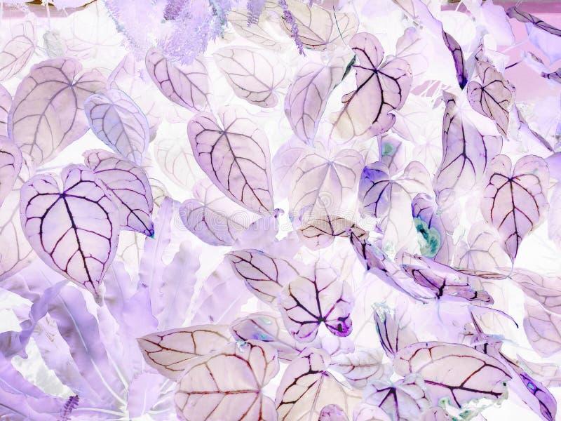 L'art des feuilles négatives de crystallinum d'anthure images stock