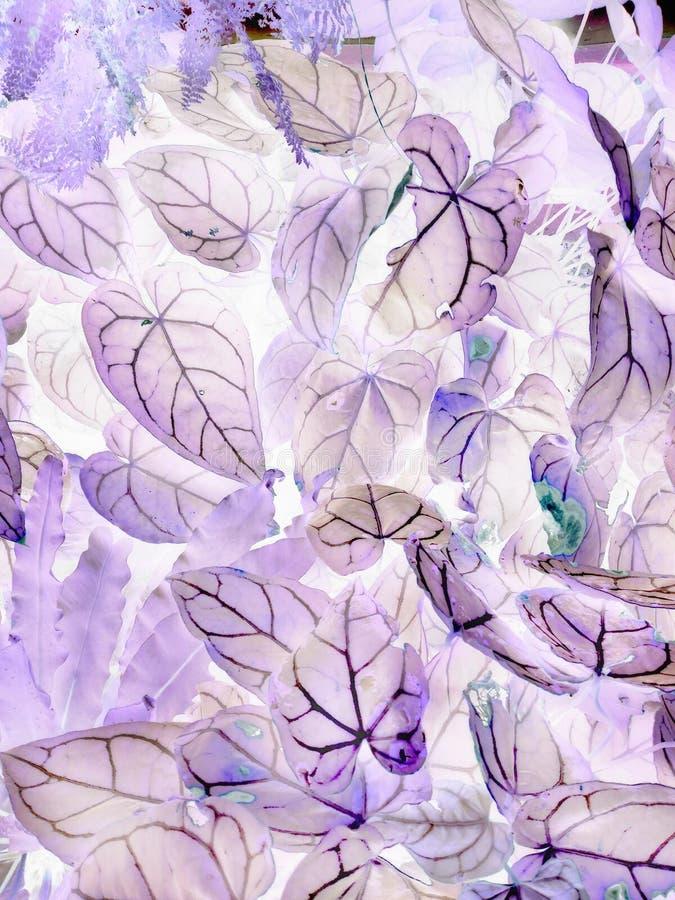 L'art des feuilles n?gatives photographie stock
