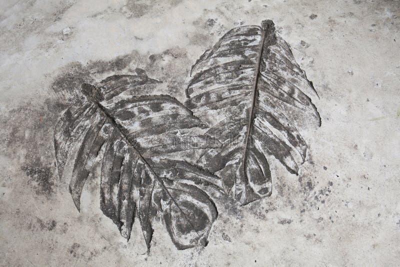 L'art et les copies de feuille sur le plancher de ciment dans l'affichage de jardin montrent images libres de droits