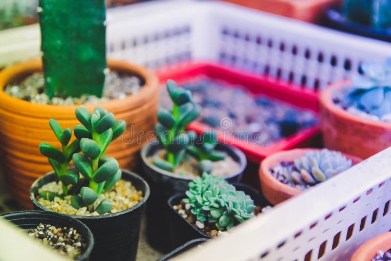 L'art moderne de la vie de fond tropical immobile créatif minimal de cactus, ton de cru de photo de filtre de style d'instagram images stock