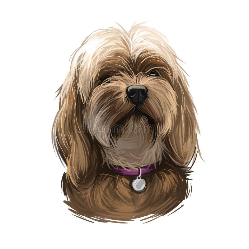 L'art numérique du chien doggy petit chien de Lowchen Animal domestique d'origine française de petite taille Chien de jouet et de illustration libre de droits