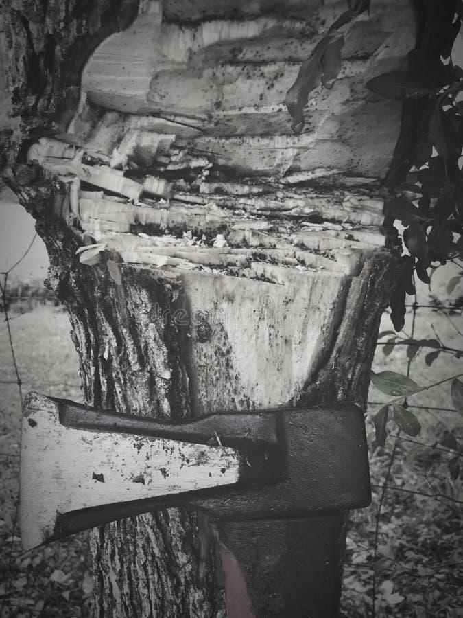 L'ascia incontra l'albero, foglie Shell della locusta immagine stock