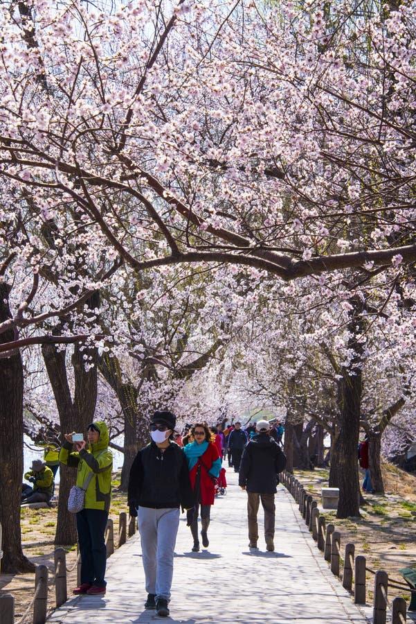 L'Asia Cina, Pechino, il palazzo di estate, mare di ŒFlower del ¼ dello sceneryï della primavera immagine stock libera da diritti