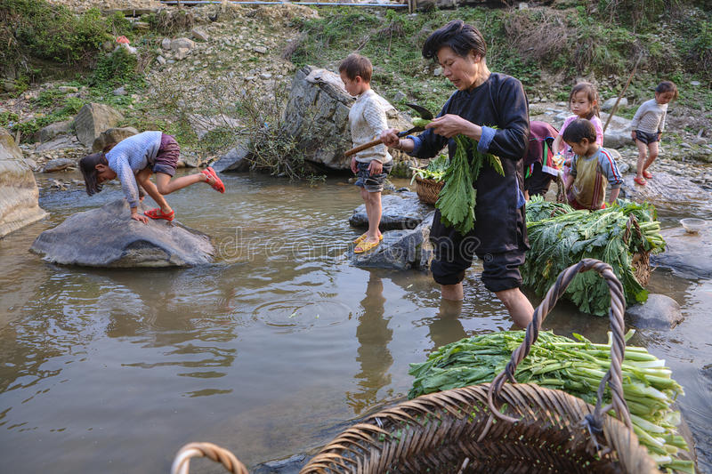 L'asiatico pulisce la lattuga, stante ginocchio-profonda nel fiume della campagna, G fotografia stock