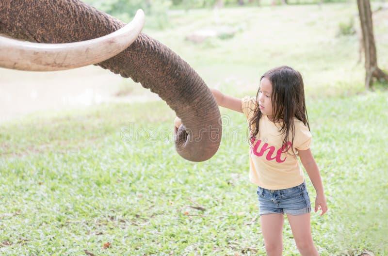 L'asiatico sveglio gode di all'elefante d'alimentazione fotografia stock libera da diritti
