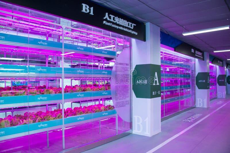 L'Asie Chine, Pékin, carnaval agricole, hall d'exposition d'intérieur, serre chaude, culture d'usine de lumière artificielle photo libre de droits