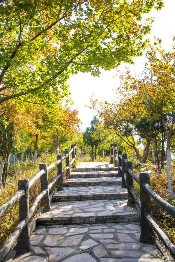 L'Asie Chine, Pékin, le palais du nord, Forest Park national, les étapes, la balustrade en bois, les feuilles d'automne photo stock