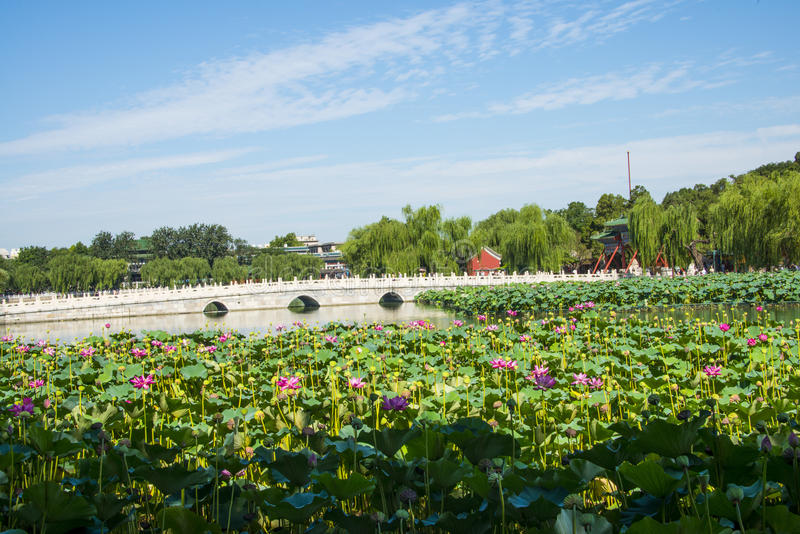L'Asie Chine, Pékin, parc de Beihai, étang de ŒLotus de ¼ de landscapeï d'été, pont en pierre images libres de droits