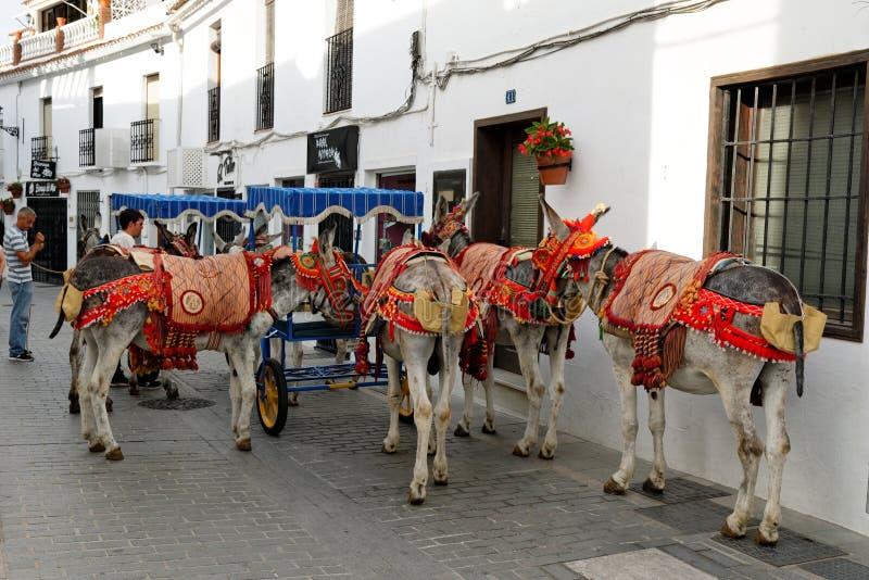 L'asino decorato variopinto ha chiamato il Burro-taxi a Mijas, il turista, Costa del Sol, Spagna fotografia stock