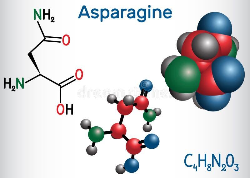 L-asparagina da asparagina, Asn, molécula do ácido aminado de N IS-IS usou-se na biosíntese das proteínas Produto químico estrutu ilustração royalty free