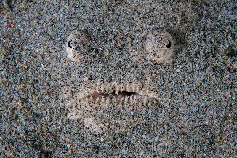 L'astronome s'enterre en Sandy Seafloor photographie stock