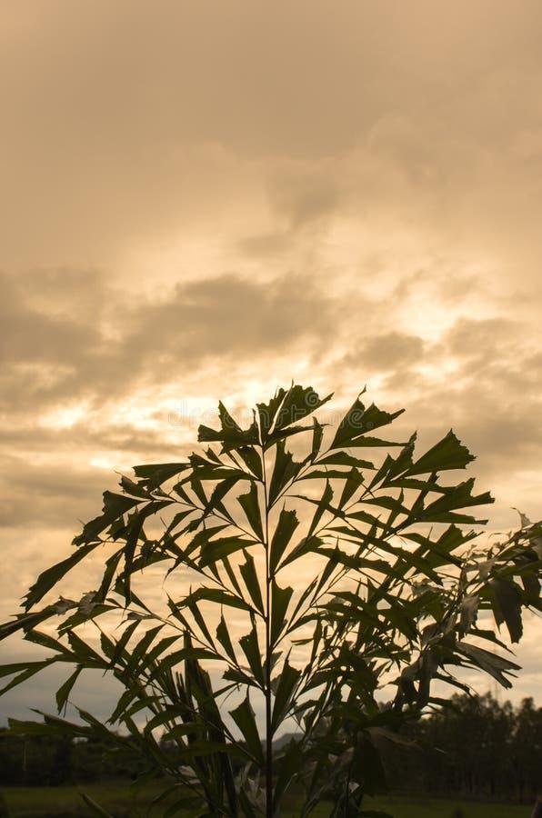 L'atmosphère dans le jardin à la soirée de coucher du soleil photographie stock libre de droits