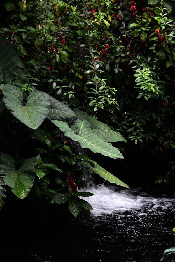 L'atmosphère de forêt tropicale photo libre de droits