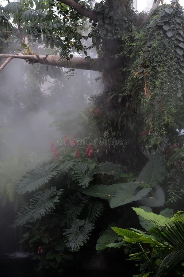 L'atmosphère de forêt tropicale photographie stock