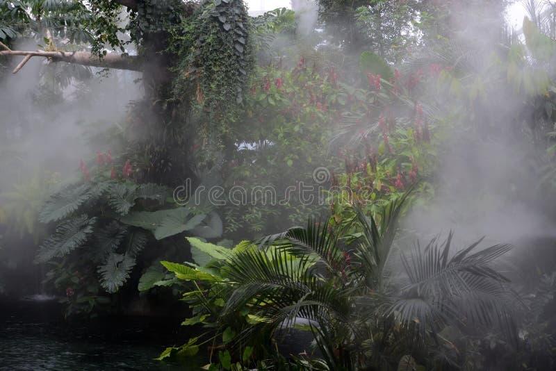 L'atmosphère de forêt tropicale photos stock