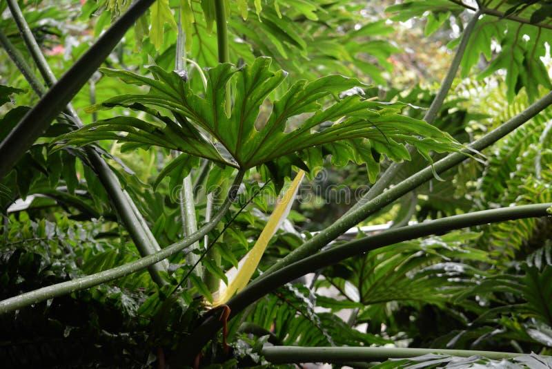 L'atmosphère de forêt tropicale photos libres de droits