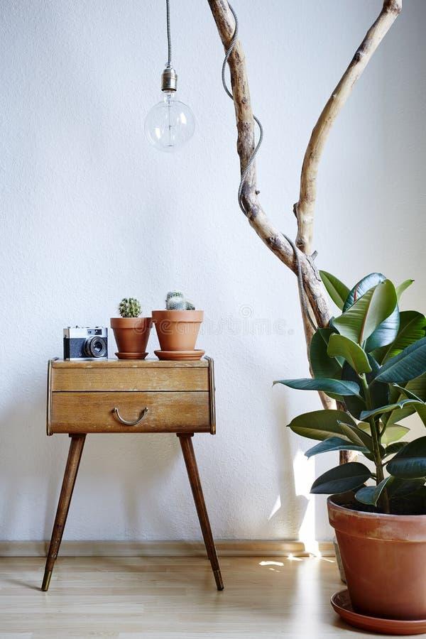 L'atmosphère ensoleillée de grenier de décoration de gomme d'arbre de cactus de branche urbaine de coffret photos stock