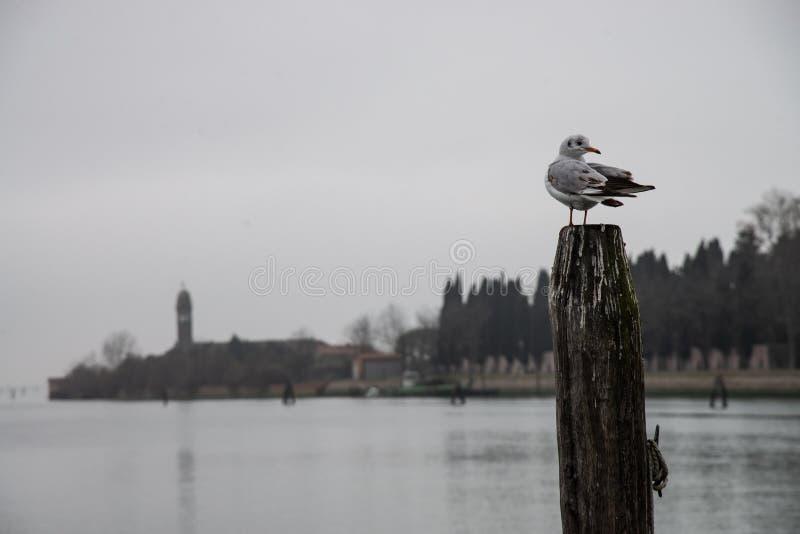 L'atmosphère froide de la lagune de Burano, Venise photo libre de droits