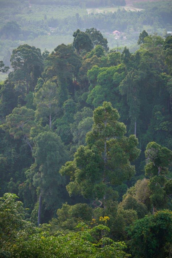 L'atmosphère pendant le matin d'un paysage tropical de forêt tropicale image libre de droits