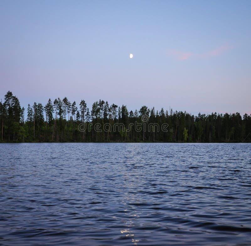L'aumento della luna sopra la riflessione di luce della luna dell'abetaia e del lago nelle onde innaffia la superficie immagini stock libere da diritti
