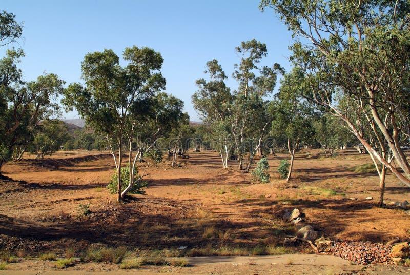 L'Australia, NT, Alice Springs immagini stock libere da diritti