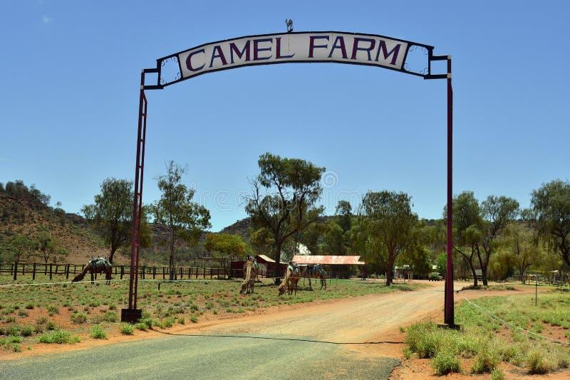 L'Australia, NT, azienda agricola del cammello immagini stock