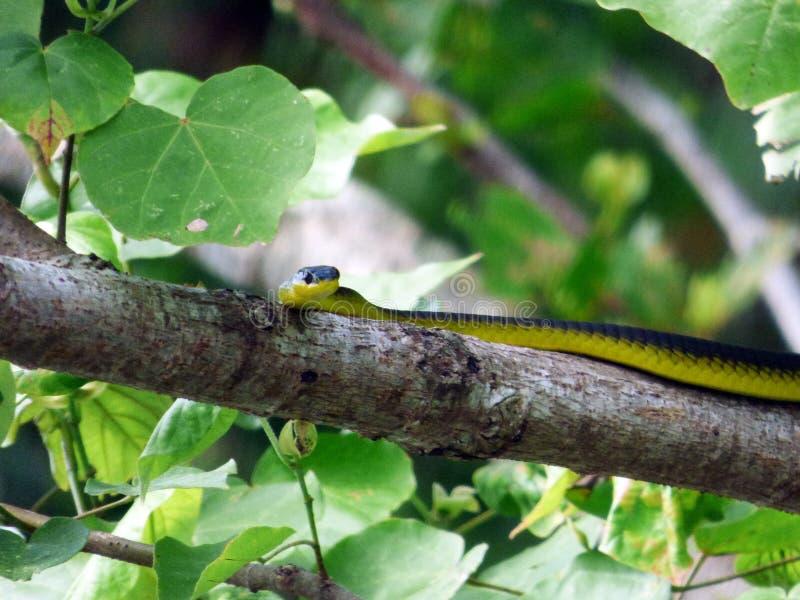 L'Australia, parco nazionale di Daintree, immagini stock libere da diritti