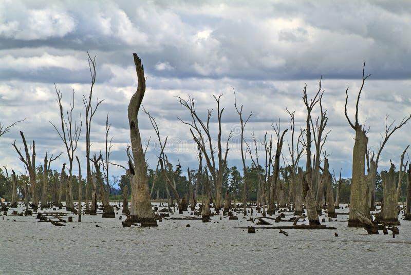 L'Australia, VIC, lago Mulwala fotografia stock libera da diritti