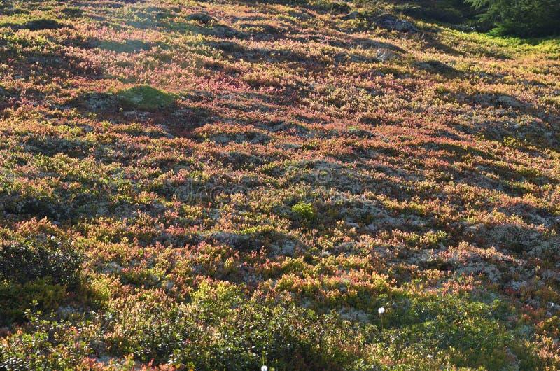 L'Austria, Tirolo, autunno fotografia stock libera da diritti
