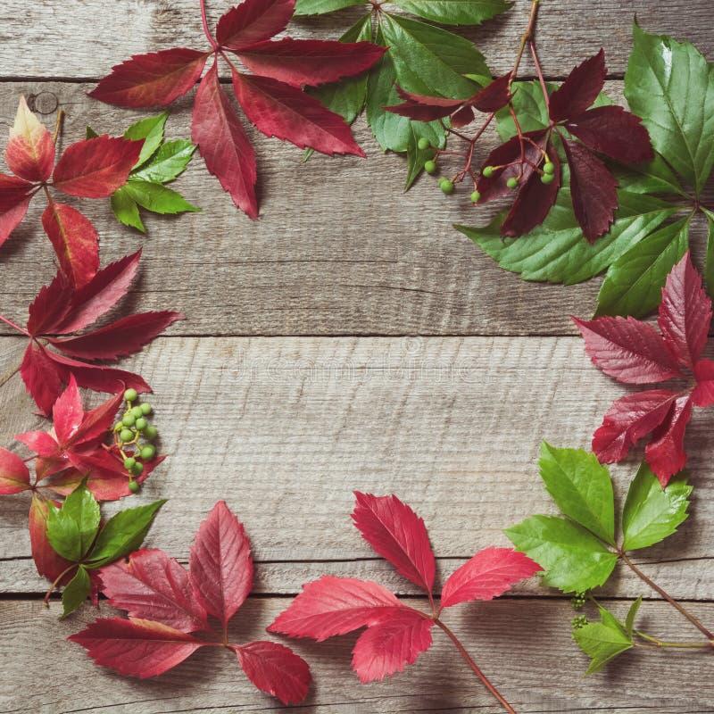 L'automne avec des raisins jaunes, rouges, oranges colorés part au-dessus du fond en bois avec l'espace de copie Concept de chute image stock