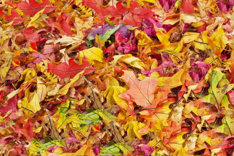 L'automne coloré laisse le fond images stock