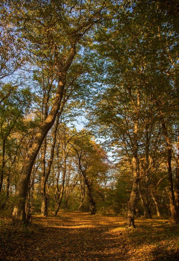 L'automne colore la forêt photographie stock