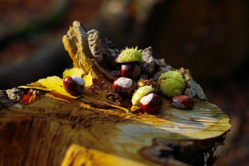 L'automne colore le naturemort photographie stock