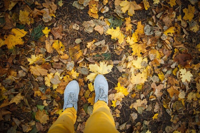 L'automne d'or, arbres jaunes au soleil, part sous les pieds photos libres de droits