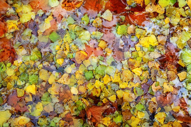 L'automne d'automne laisse le fond coloré dans l'eau images libres de droits