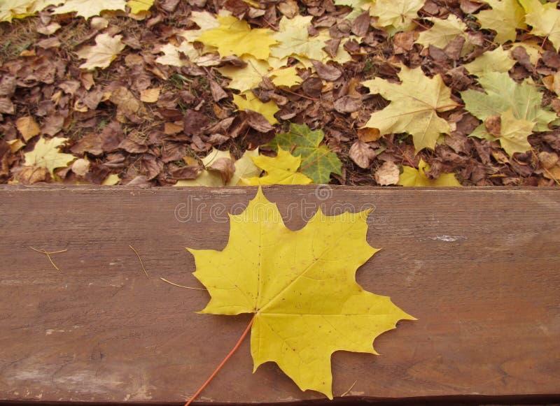 L'automne dans le parc, fond. Feuille jaune photo stock
