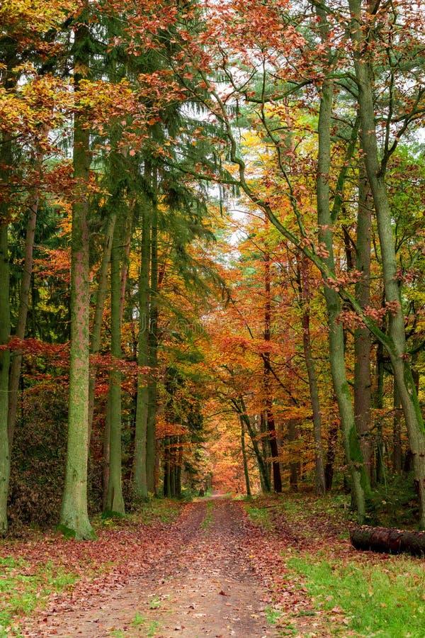 L'automne ensoleillé dans la forêt complètement de couleur part, la Pologne photo stock