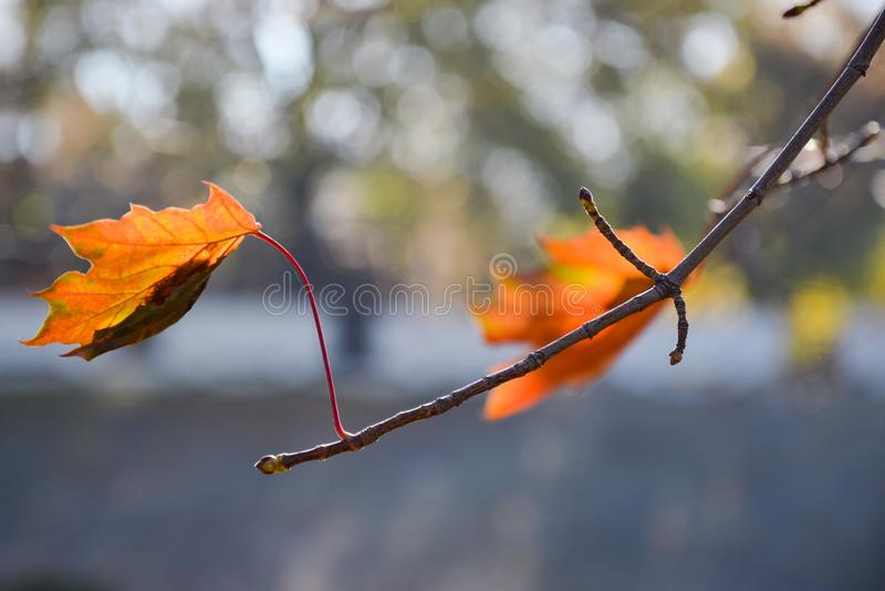 L'automne est beau dans tout images stock