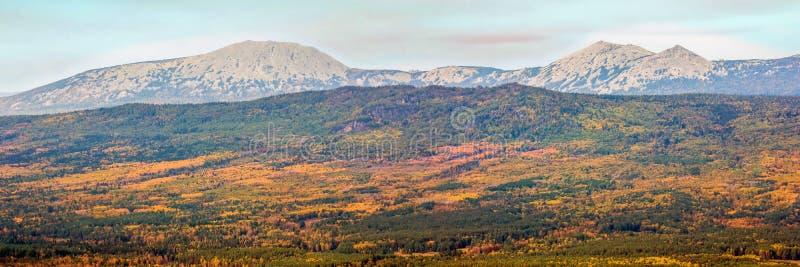 L'automne illimité Taiga contre le contexte des hautes montagnes du grand Iremel dans les Monts Oural du sud photos libres de droits