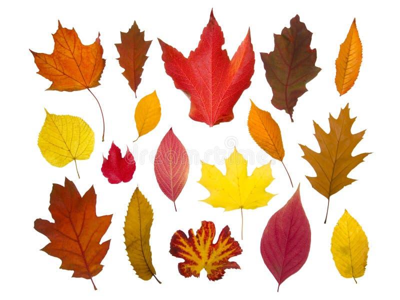 l'automne a isolé des lames photographie stock