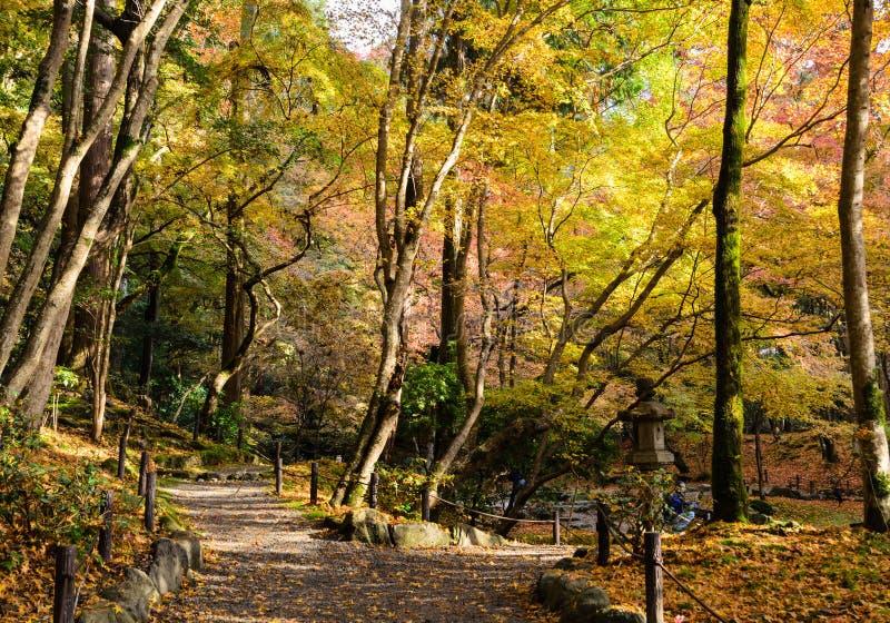L'automne japonais a coloré des feuilles font du jardinage dans le temple de Daigo-JI, Kyoto, image libre de droits