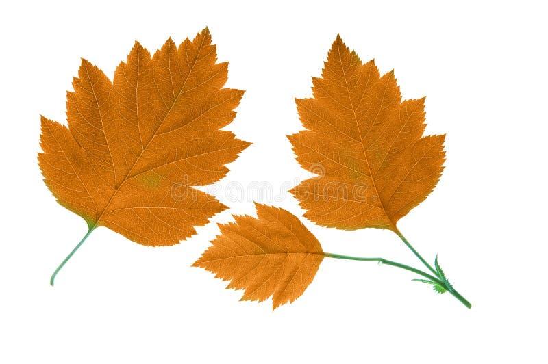 l'automne laisse l'orange photos stock