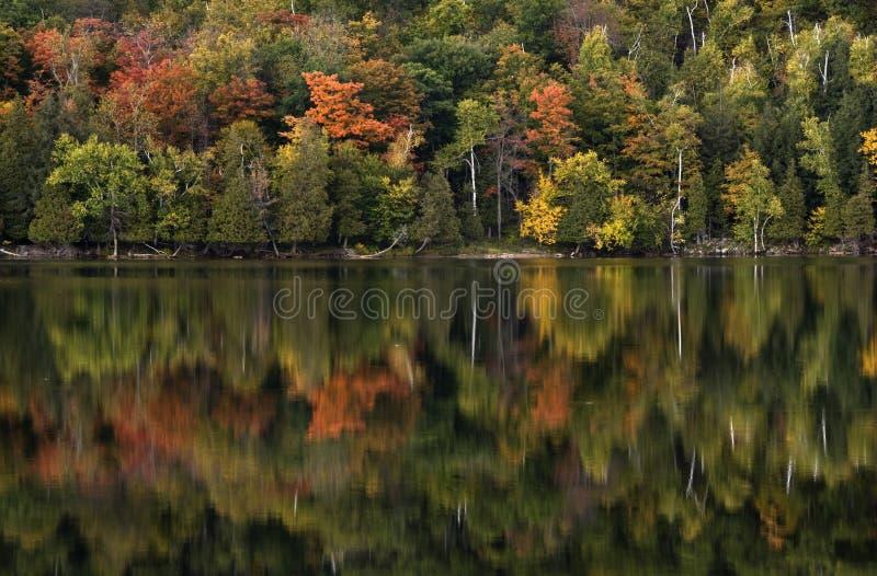 L'automne laisse la réflexion images libres de droits