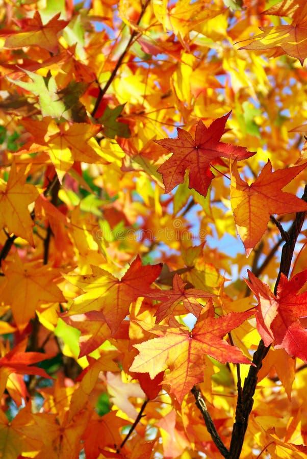 L'automne laisse le fond photographie stock libre de droits